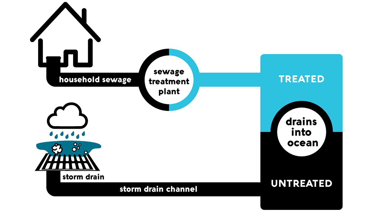 Illustrated infographic showing how water in storm drains flows untreated to the ocean, while water in the sewer is treated at a treatment plant before being discharged.
